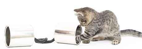 Διατροφή γάτας