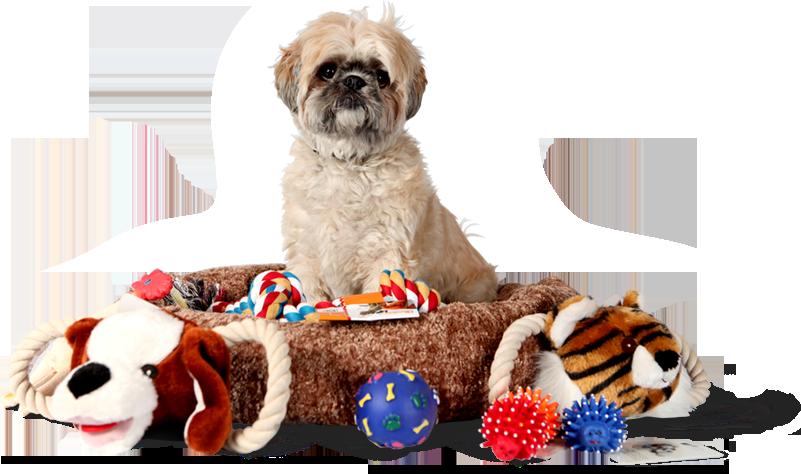 pet-accesories