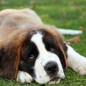 Parvo-εντερίτιδα του σκύλου- Τύφος